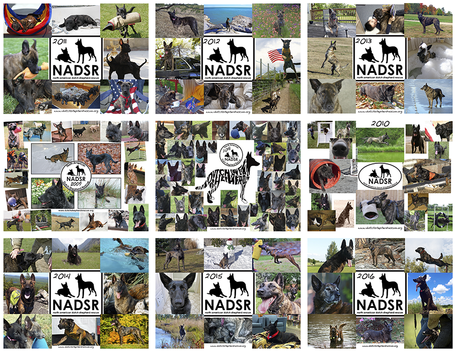 NADSR-calendar-9YearsOfCovers.png